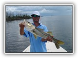 Big Snook